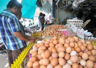 Bisnis Telur Untungnya Tak Terukur