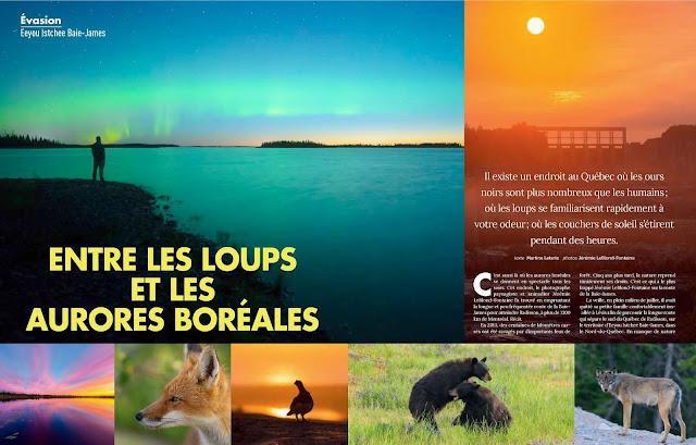 geo plein-air, magazine, baie james, quebec, canada, jérémie leblond-fontaine, wildlife, animaux, ours, renards, loup