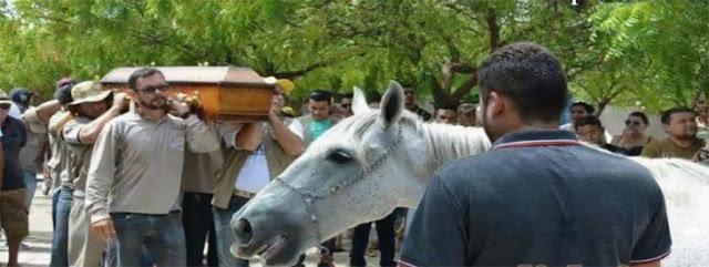 Video: un caballo acude a funeral de su amo para despedirlo