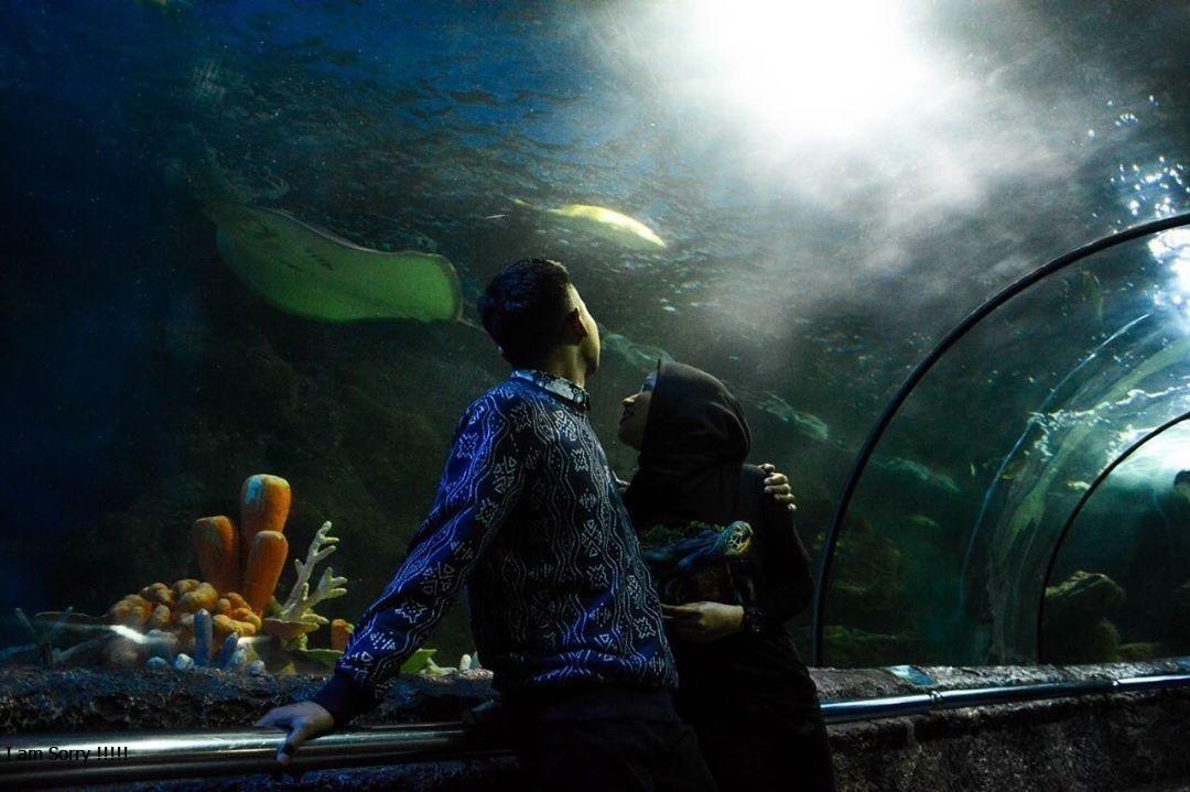 Lokasi Seaworld Ancol