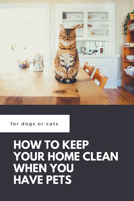 How to keep your house clean with pets.  Get ticks and hacks for a tidy home with dogs and cats. Get solutions for upholstery cleaning, how to get rid of pet odors, removing hair, and cleaning floors and carpets. We love our pets, but they can make big messes!  Keep your home clean with these life hacks for pet owners. #homemaking #pets #dogs #cats