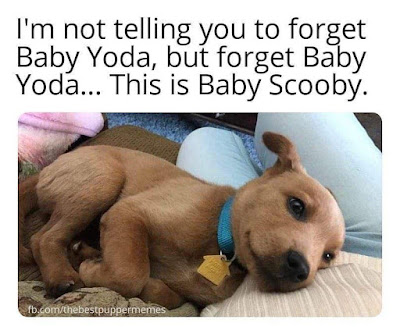 Baby Scooby