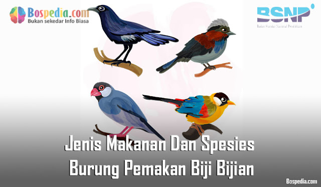 Jenis Makanan Dan Spesies Burung Pemakan Biji Bijian