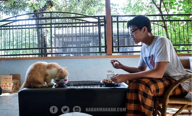 Peringatan Rasulullah Untuk Muslim yang Pelihara Kucing! Anda Bisa Masuk Neraka Jika Lakukan Hal Ini