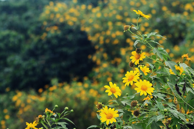 Beautiful flowers seasons in Dalat 5