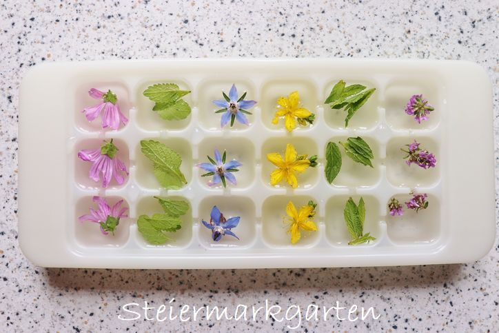 Blüten-Kräuter-Eiswürfel-DIY-Steiermarkgarten