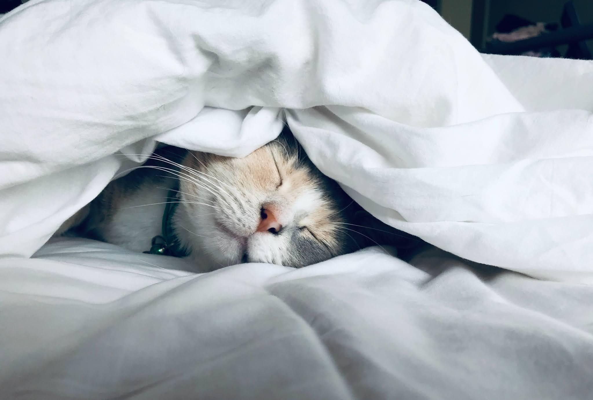 good cat care equal a happy cat