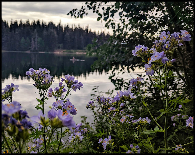 Beautiful Purple Flowers along the edge of the lake and side of the trail.