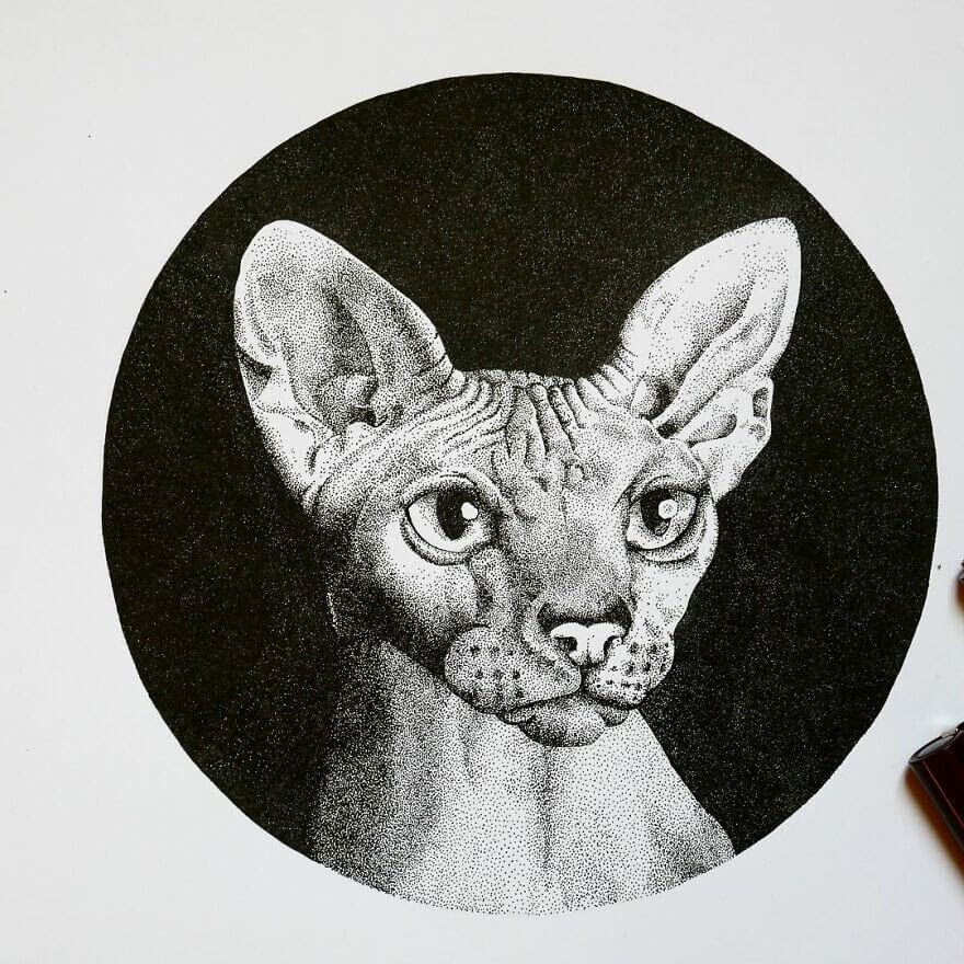 05-Sphynx-cat-Fred-Ughetto-www-designstack-co