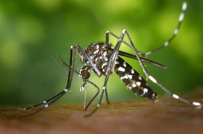 Φυσική προστασία από τσιμπήματα κουνουπιών