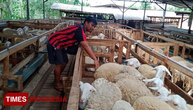 Relakan Gaji Rp 20 Juta, Peternak di Bondowoso Malah Raup Rp 2 Miliar Per Bulan