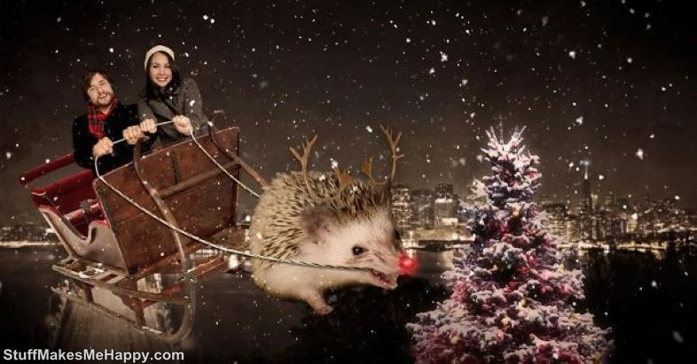 10. Horned Christmas Hedgehog!