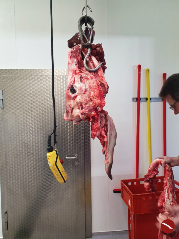 Wo die wilden Kühe wohnen ... und das Fleisch für meine Küche herkommt {Triggerwarnung: Dieser Beitrag enthält Bilder von geschlachteten Kühen, die eventuell verstörend wirken können}