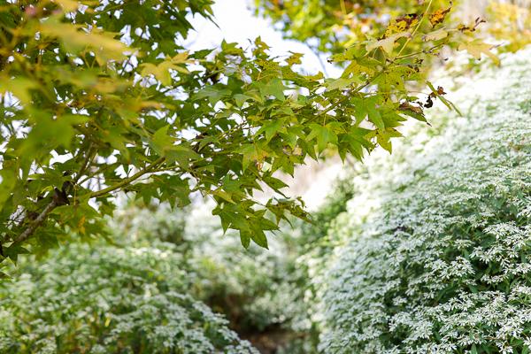 台中新社沐心泉休閒農場黃楓白雪木步道超浪漫,開心歡慶聖誕節