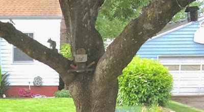 Tiny squirrel eating a nut on a tree
