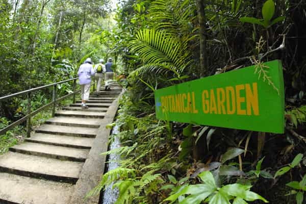 Mountain Botanical Garden at Mount Kinabalu