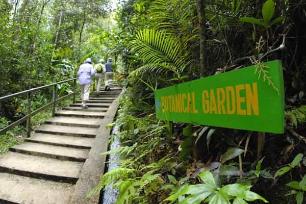 Mountain Botanical Garden at Mount Kinabalu