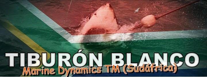 Tiburón-blanco-Sudáfrica