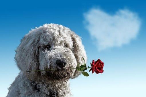 Descubre las señales que hará tu perro para demostrar su amor