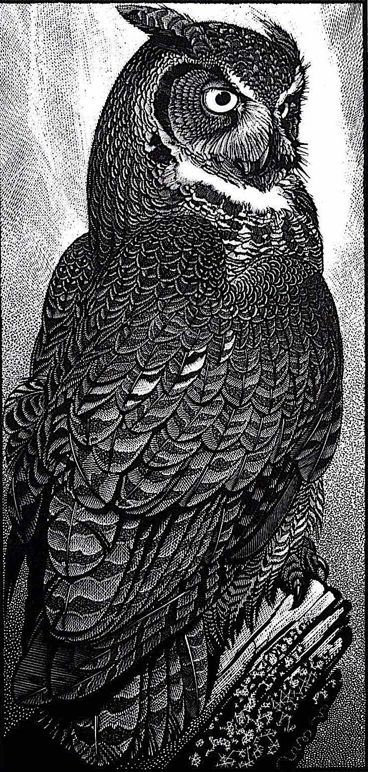 a Colin See Paynton scatchboard illustration of an owl