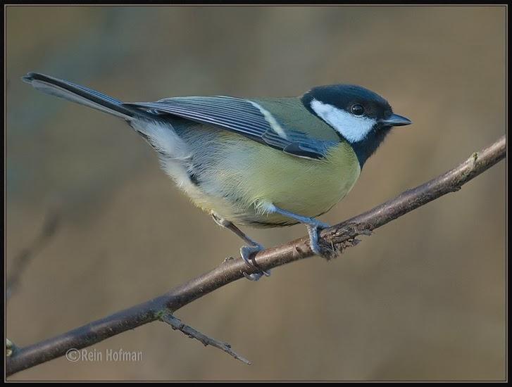 Vogels in de tuin en studeren
