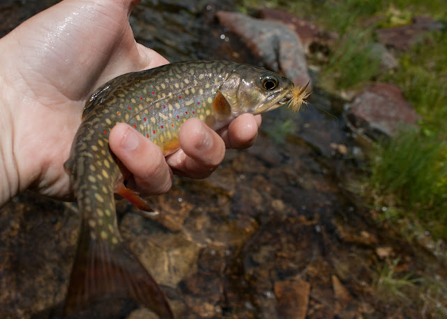 New Hampshire Remote Pond Brook Trout