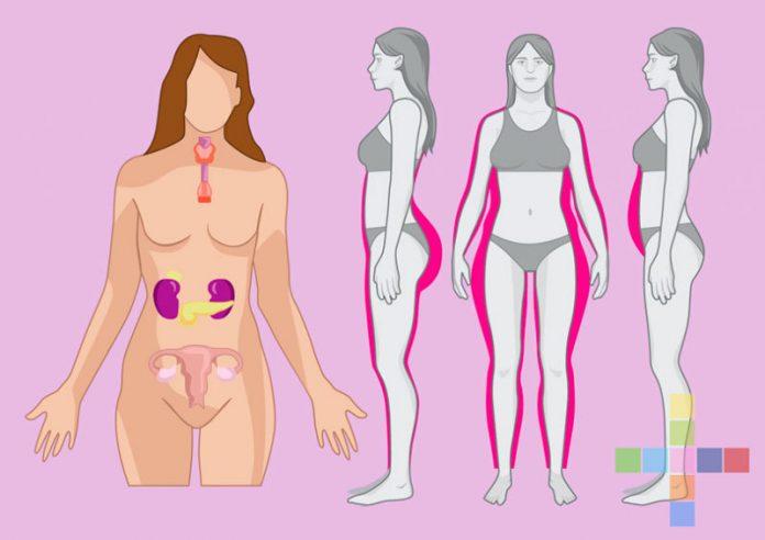 как сбалансировать питание чтобы похудеть