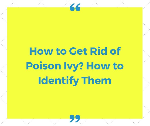 How to get rid of Poison Ivy? How to Identify them