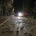 Miles de pájaros caen muertos del cielo en gran parte de Europa sembrando el temor.