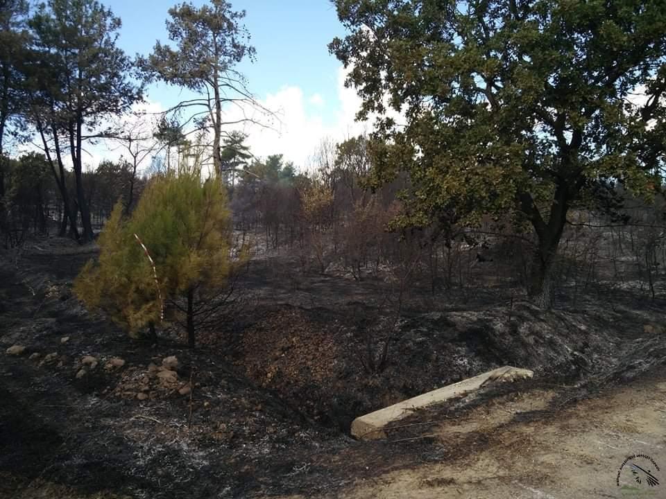 Δάσος της Δαδιάς: Η επόμενη μέρα μετά την πυρκαγιά