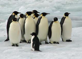 Penguins Photos