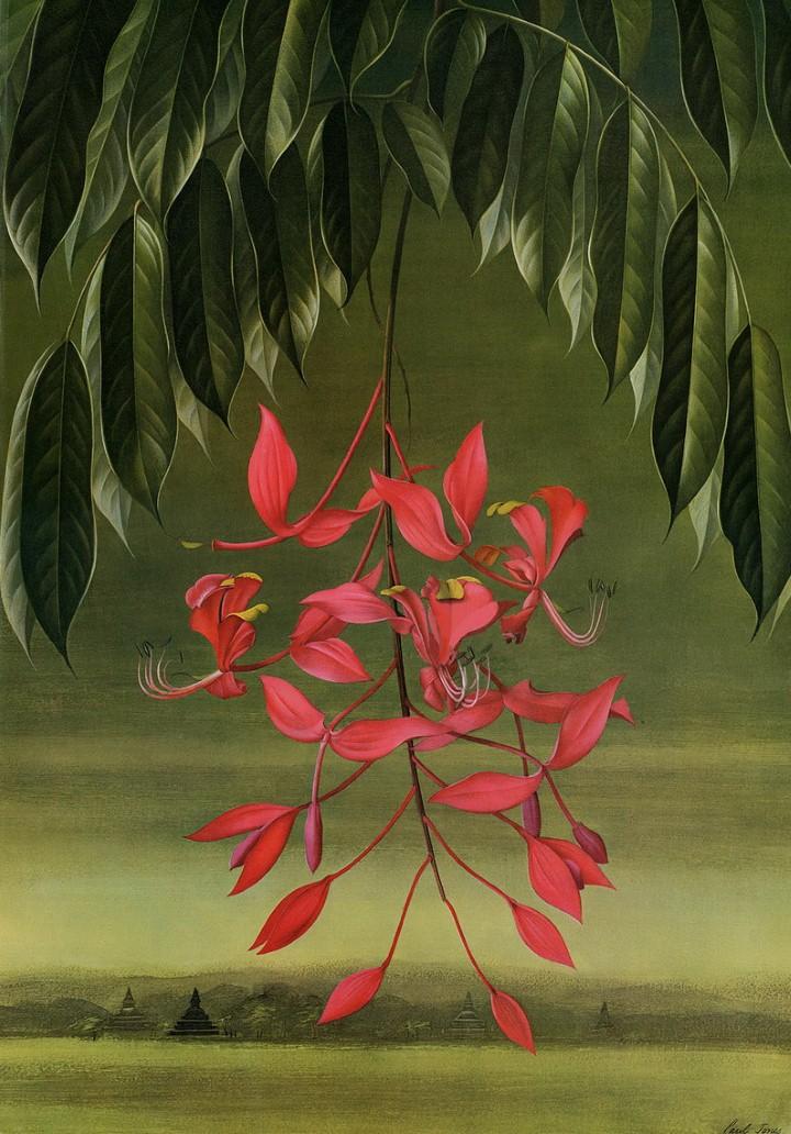Paul Jones. Акварельные рисунки цветов 31