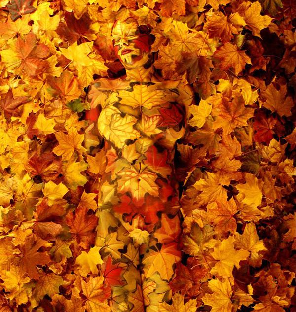 Body painting, pittura del corpo, arte, donna, foglie, autunno