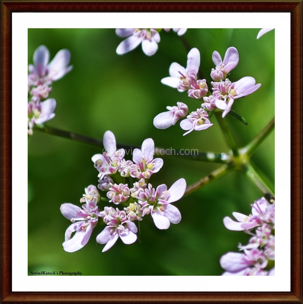White, Pink, Flowers, Tiny Flowers, Nature art