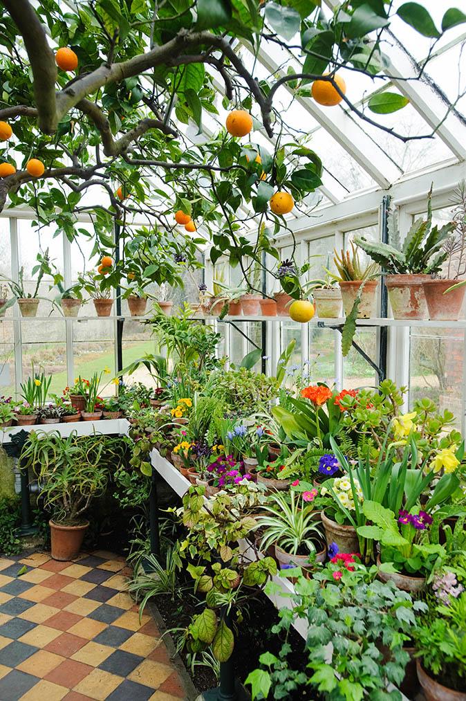 Daydreaming of Greenhouses- designaddictmom