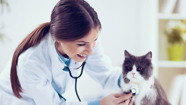 how much do veterinarians make