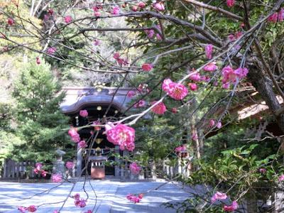 鶴岡八幡宮の梅