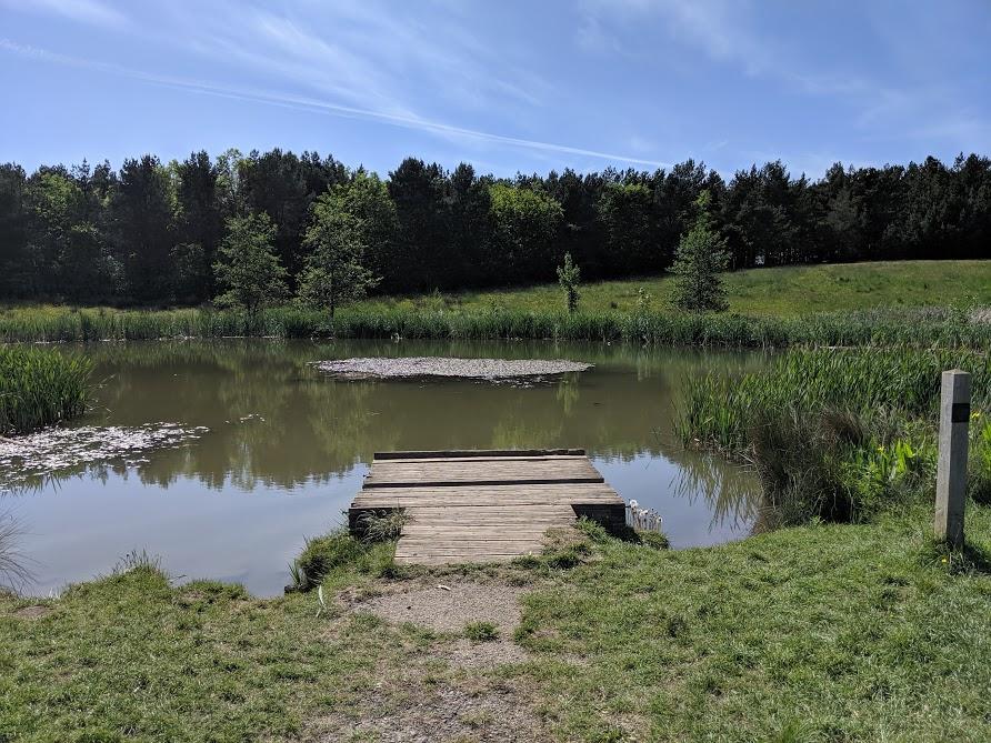East Cramlington Nature Reserve Trail  - pond