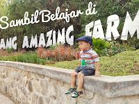 Yuk, Piknik Sambil Belajar di DKandang Amazing Farm