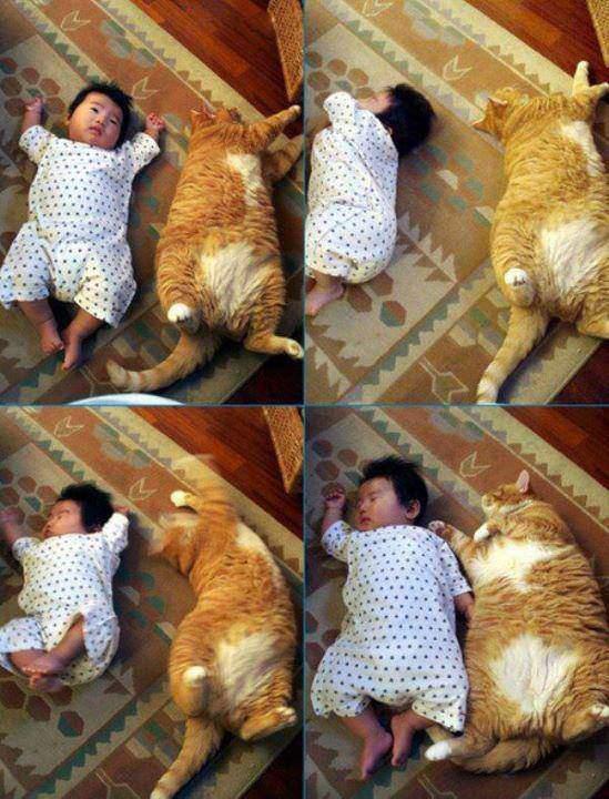 Wow Foto Keren: Bayi Tidur Bareng Kucing ini Buat Merinding