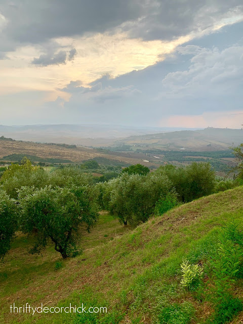 Italian countryside with olive trees