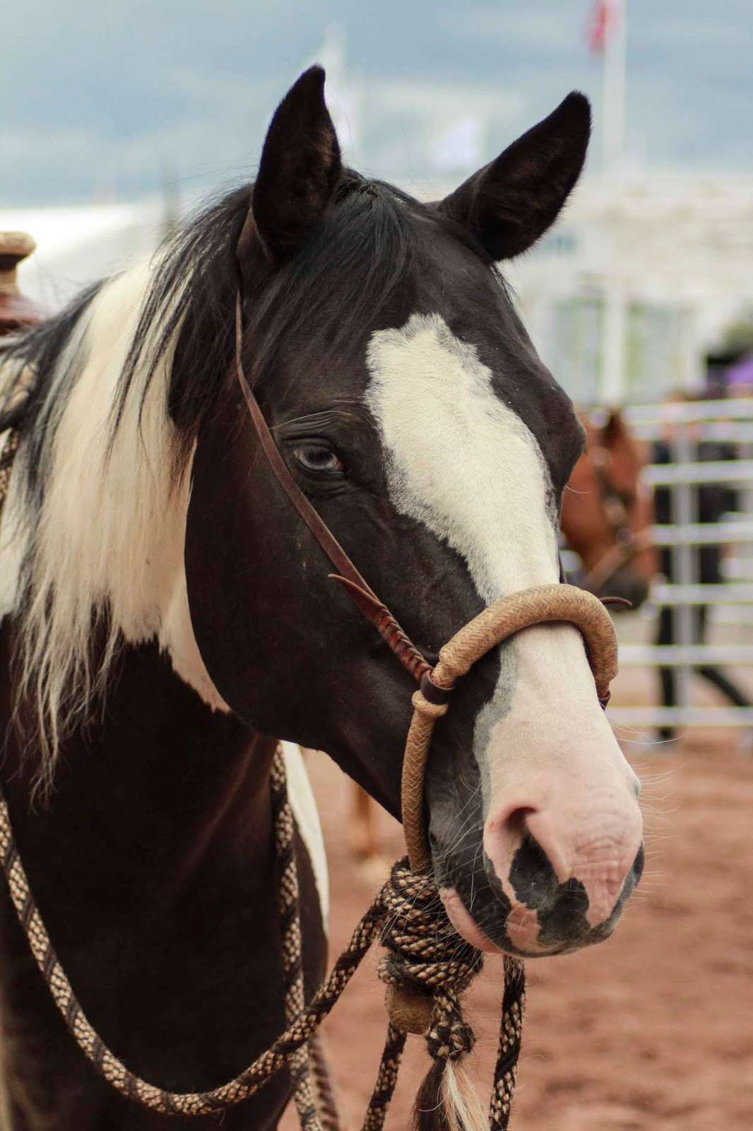 Dancer on Sanna Kauppisen omistama paint-ruuna. Se on menestynyt lännenratsastuskilpailuissa ja se on erinomainen karjanajossa. Paint-hevoset ovat alunperin olleet kirjavia quarter-hevosia, mutta niiden jalostus eriytyi omakseen jo vuosia sitten ja nykyään quarter ja paint ovat omat rotunsa.