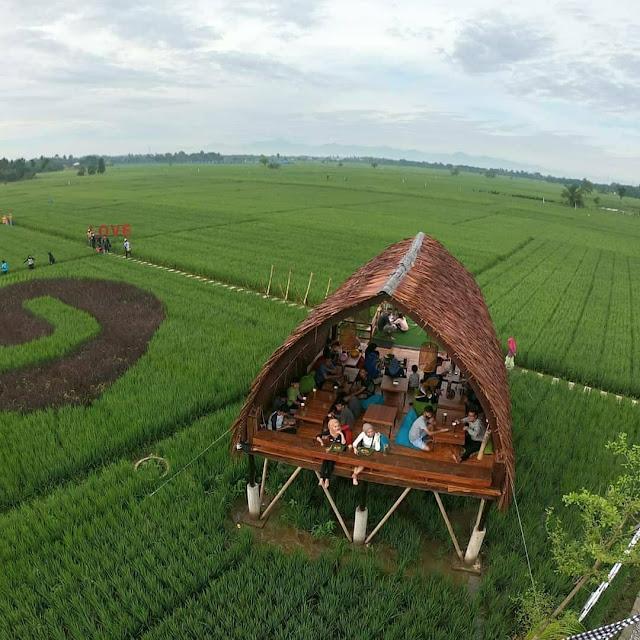 Sawah Lukis di Binjai Sumatera Utara