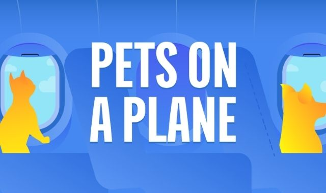 Pets on a Plane: The World's Top 50 Pet-Friendly Airlines