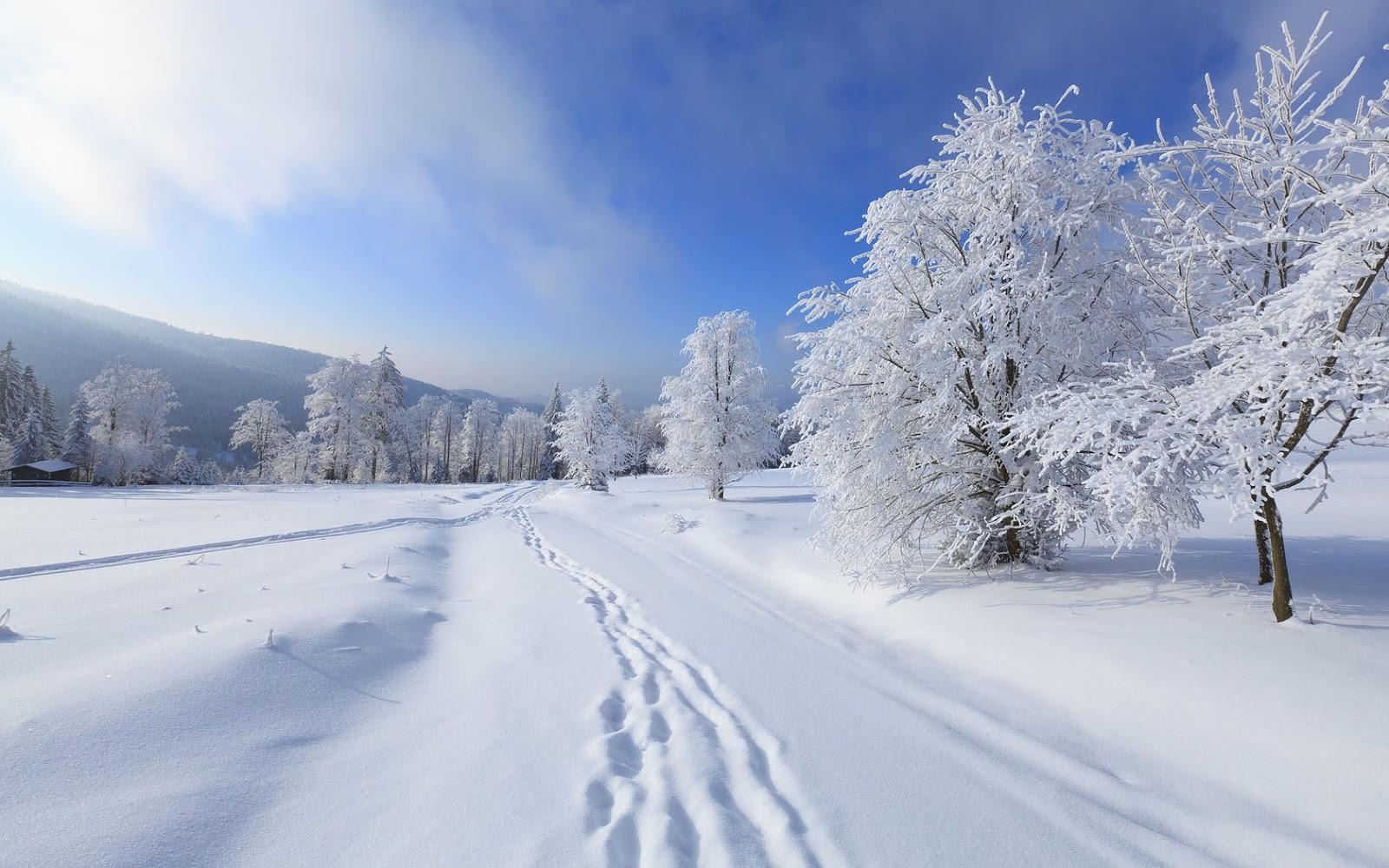 Winter Landschap Met Laag Sneeuw  Mooie Leuke