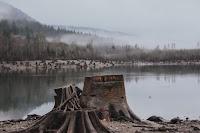 Stumped - Photo by DAVID NIETO on Unsplash