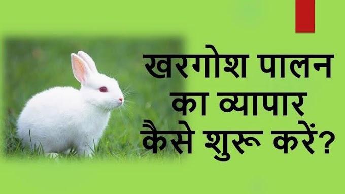 खरगोश पालन का व्यापार कैसे शुरू करें।  how to start rabbit farming Business in india