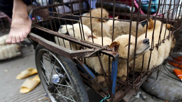 La ciudad china de Shenzhen prohibirá el consumo de carne de perro y gato por el coronavirus