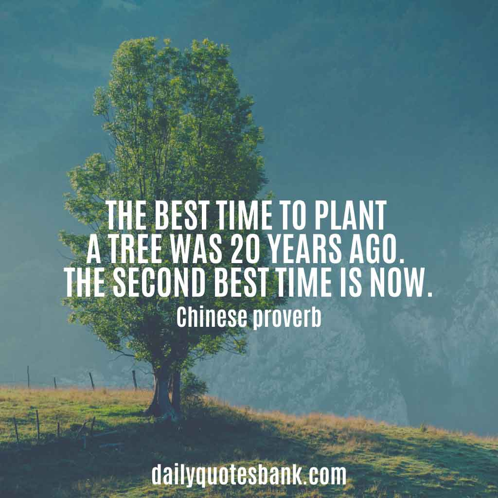 100 Inspirational Quotes About Planting Trees For Future ...