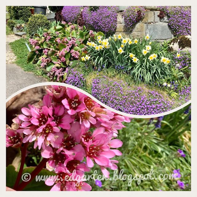 Blühender Vorgarten